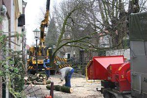 Bomen kappen Zevenhuizen