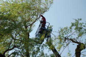 Bomen snoeien Alphen aan den Rijn