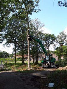 Boomverzorging Nieuwerkerk aan den IJssel